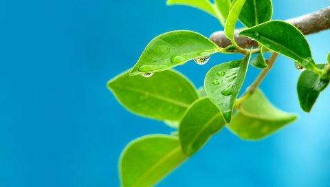 Растение, ветка, весна, листья