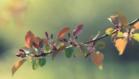 Веточки, трава, яблоки, листья, цветы