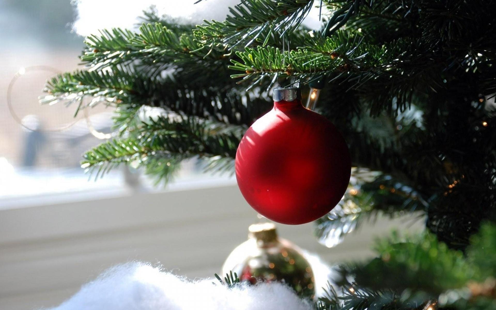Картинки Рождественские украшения, мяч, иглы, филиал, макро фото и обои на рабочий стол
