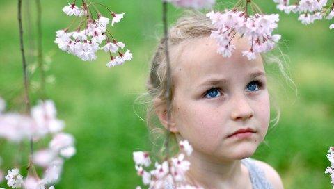 девушка, ребенок, лицо , голубые глаза, сад, цветы