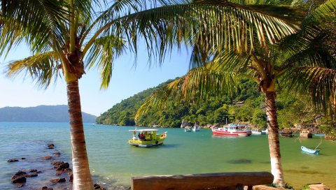 лодки, залив, побережье, рыбалка, пальму деревья,филиалы