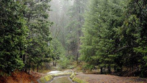 Дождь, лес, река, плохая погода