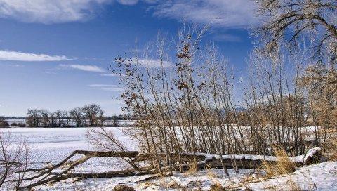 Кусты, зима, колорадо, деревья, снег