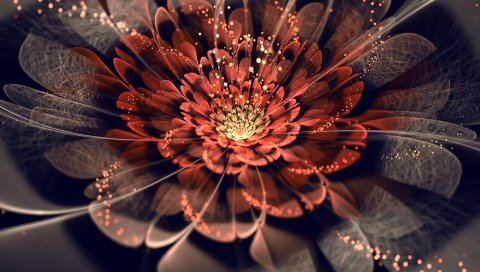 Цветок, фон, линия, тень