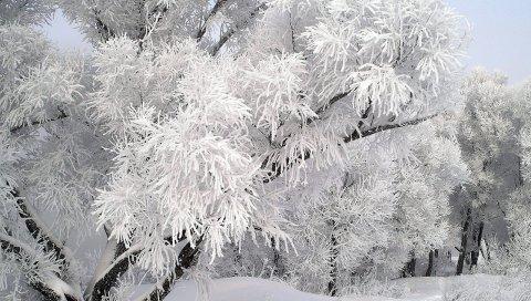 Мороз, дерево, ветка, декабрь, зима