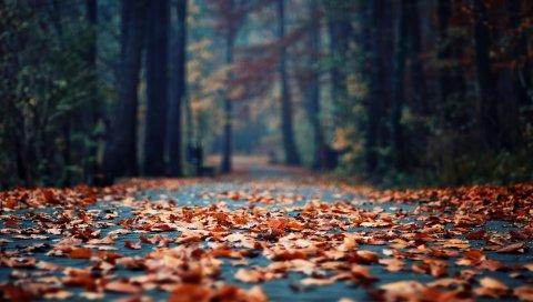 Листья, асфальт, осень, парк, увядание