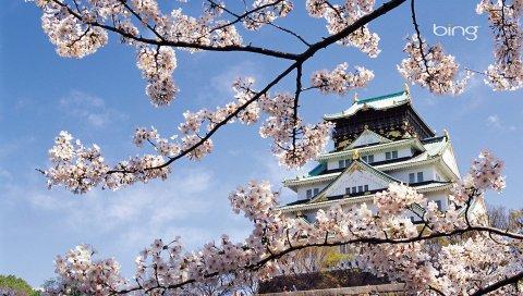 Весна, вишня, цвести, дворец, Япония, архитектура
