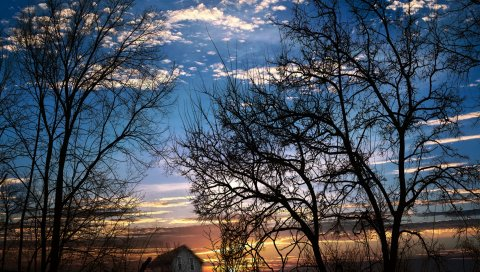 Ветви, деревья, закат, вечер, сумерки, небо, облака, дом, склон