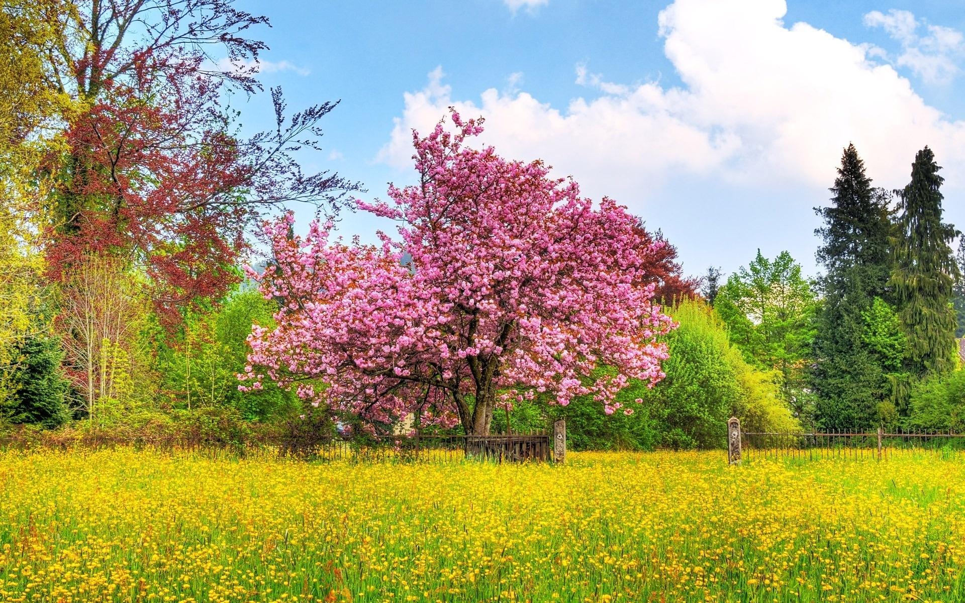 Картинки Весна, дерево, куст, цветок, поле, забор фото и обои на рабочий стол
