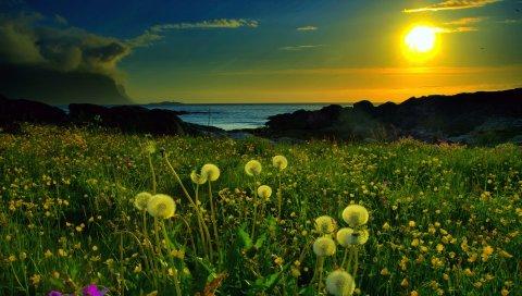 Закат, солнце, одуванчик, поле, цветы