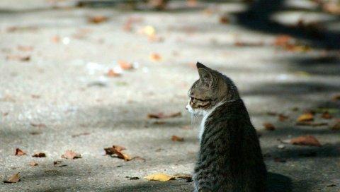Кошка, листья, осень, ожидание, полосатый