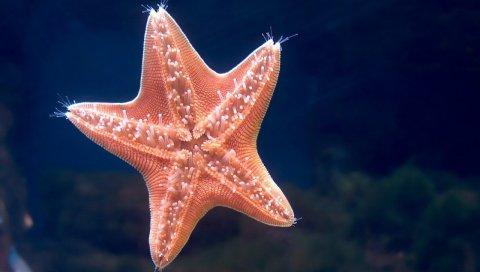 Морская звезда, подводное плавание, море