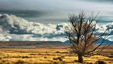 Новая Зеландия, степь, дерево, одиночество, поле