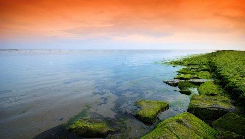 Зеленый, оранжевый, мох, озеро, вечер