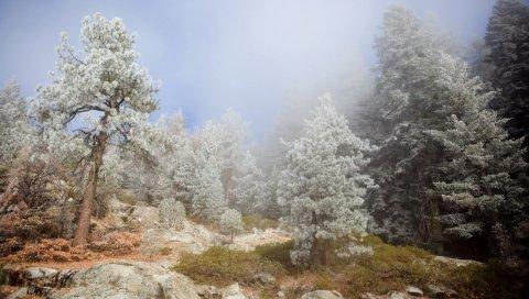Деревья, хвойные, камни, туман, пейзаж