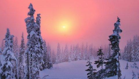 Зима, упад, хвойный лес, сугробы, елки, тайга
