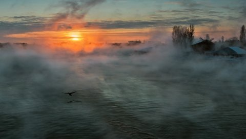 Река, туман, солнце, утро, дымка, дом, птица, сорняки