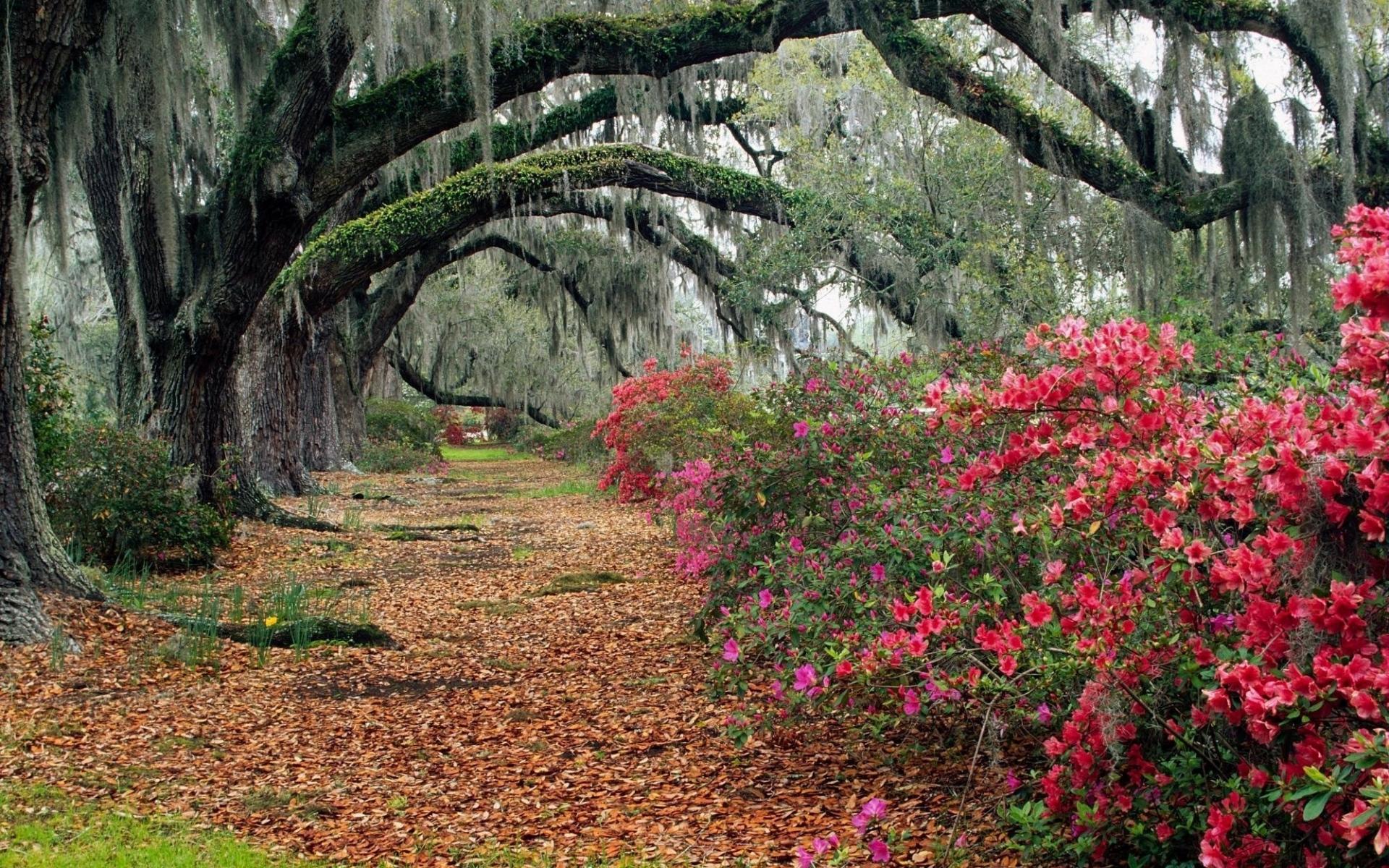 Картинки Парк, цветы, деревья, ветви, листья, осень, магнолии фото и обои на рабочий стол