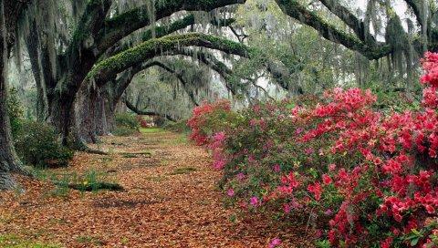 Парк, цветы, деревья, ветви, листья, осень, магнолии