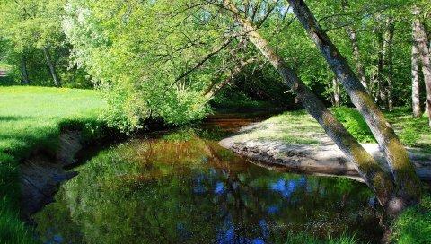 Река, дерево, склон, ветви, поляна, берег, тени