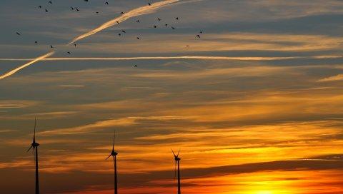 Небо, птицы, вечер, закат, оранжевый, сумерки, пейзаж