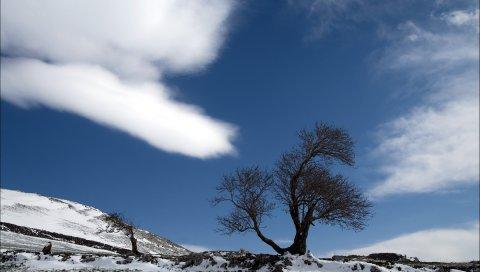 Дерево, облако, снег, земля, одиночество