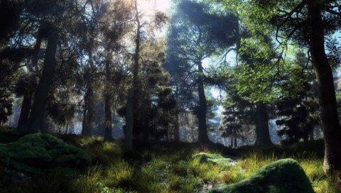 Деревья, дерево, камни, мох, трава, земля, цвета