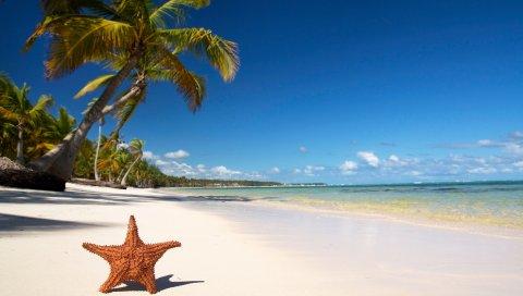 Звезда, побережье, пляж, песок, пальмы, тропики