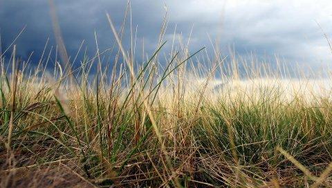 Трава, осень, земля, макро