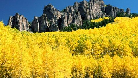Осень, березы, горы, желтый, колорадо