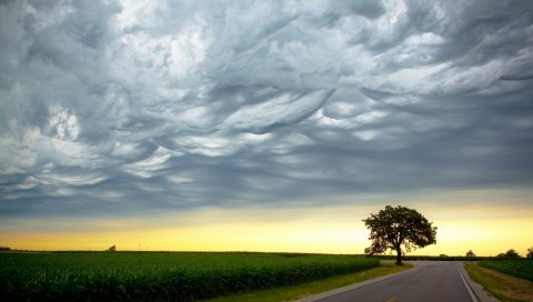 Дерево, вечер, дорога, пересечение, поле, облака, воздух