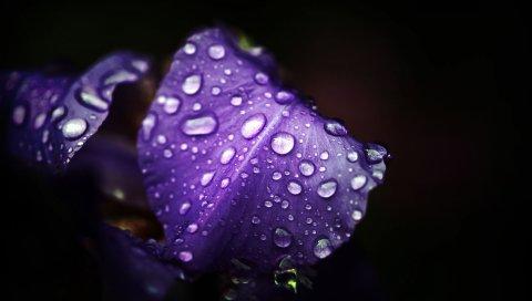 Цветок, капля, темный
