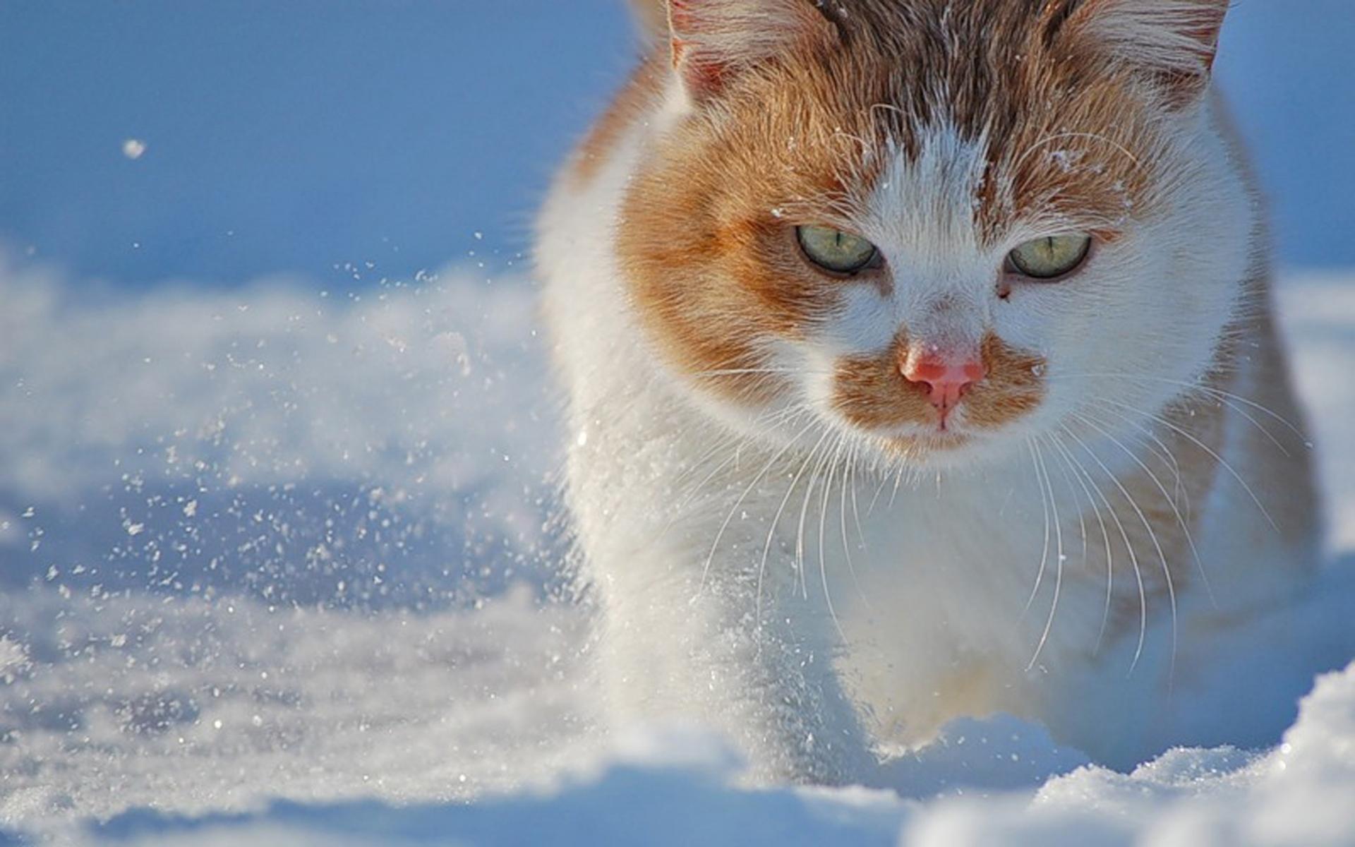 быстро картинки на рабочий стол зима котики в снегу конструкция отличается