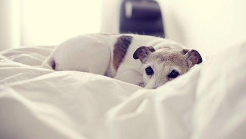 Собака, лежа, кровать, холод