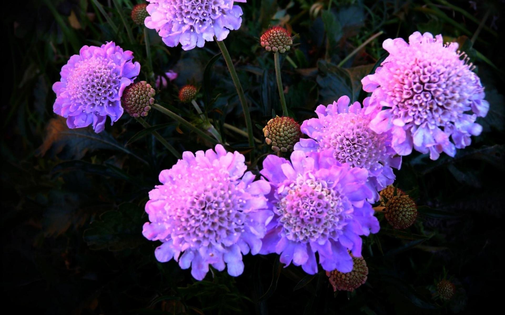 Картинки Цветы, фиолетовый, ночь, клумба фото и обои на рабочий стол