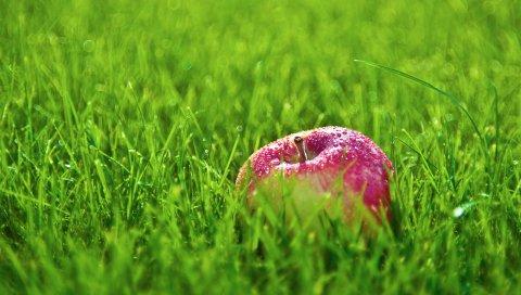 Яблоко, капли, трава, лужайка, фрукты, красный