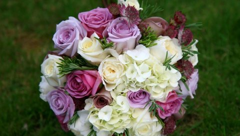Розы, гортензия, астрия, цветок, трава