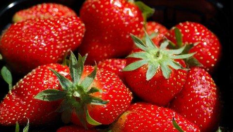Клубника, ягода, красный, макро, шляпы