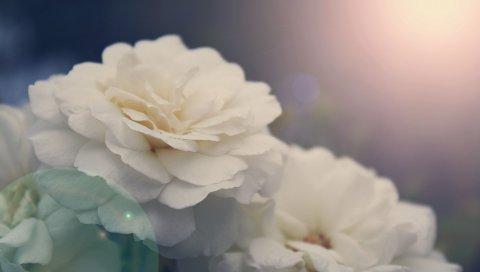 Цветок, лепестки, свет, блики, бутон