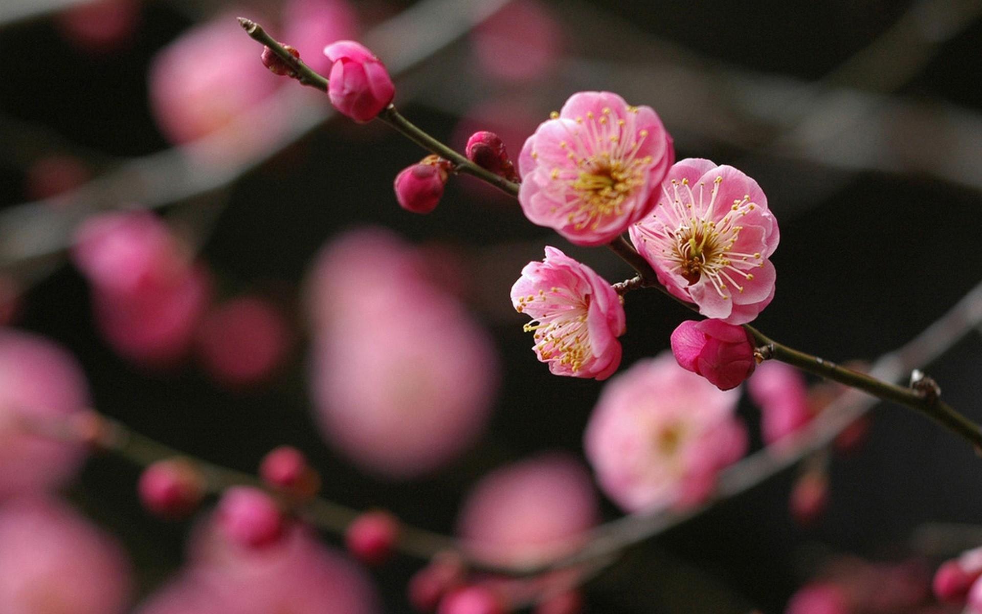 Картинки Цветок, ветка, растение, яркий, весна фото и обои на рабочий стол