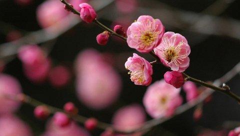 Цветок, ветка, растение, яркий, весна