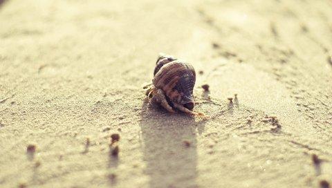 Улитка, песок, поверхность, яркий, панцирь