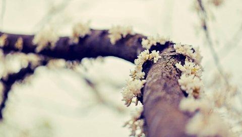 Ветка, цветы, мох, размыты