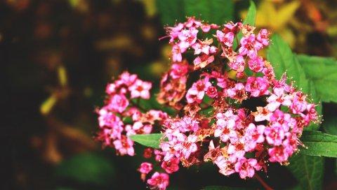 Цветы, ветки, травы, лепестки, листья