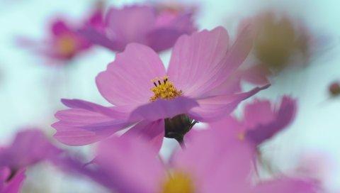 Цветы, размытые, лепестки, яркие
