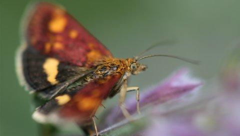 Бабочка, листья, яркие, размытые