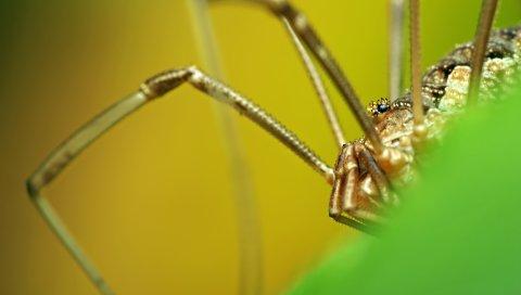 Паук, ноги, насекомое, трава, крупный план