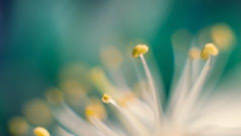 Цветок, макро, тычинки, листья, свет