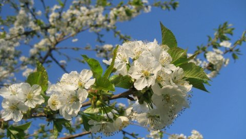 Цветение, ветви, небо, весна, настроение