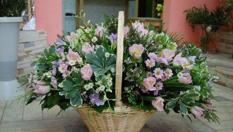Тюльпаны, ромашки, чайное дерево, цветок, корзина, композиция, красивые